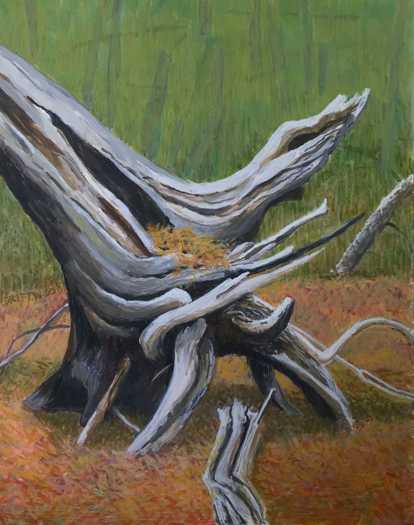 Driftwood by Jane Carr