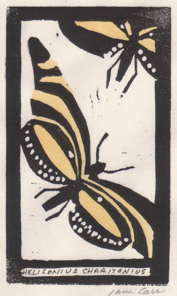 Heliconius Charitonius by Jane Carr